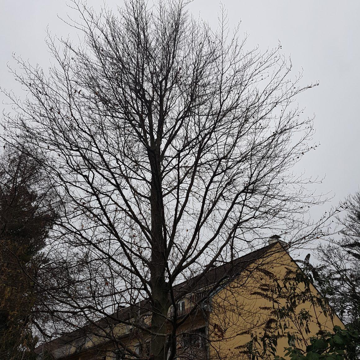 Baumschnitt im Spätherbst