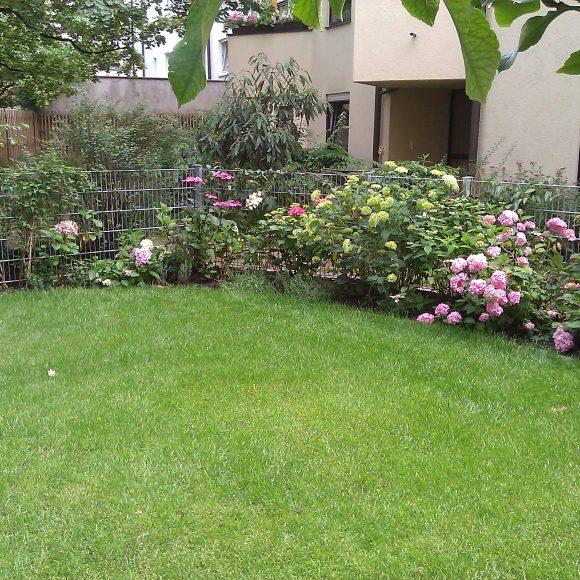Hinterhofgarten mit Hortensienbeeteinfassung und Rollrasenfläche